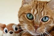 Datos sobre los gatos, que te dejarán pensando