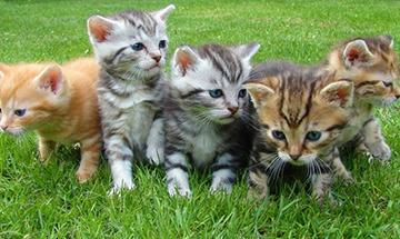 10 Datos sobre los gatos, que te dejarán pensando